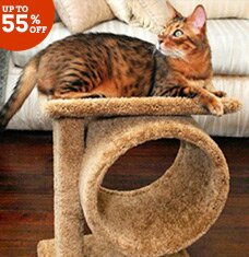 Play Purrfect: Cat Trees & More