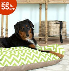 Playful Finds for the Pet Lover
